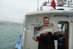 Dave Colcough Cod