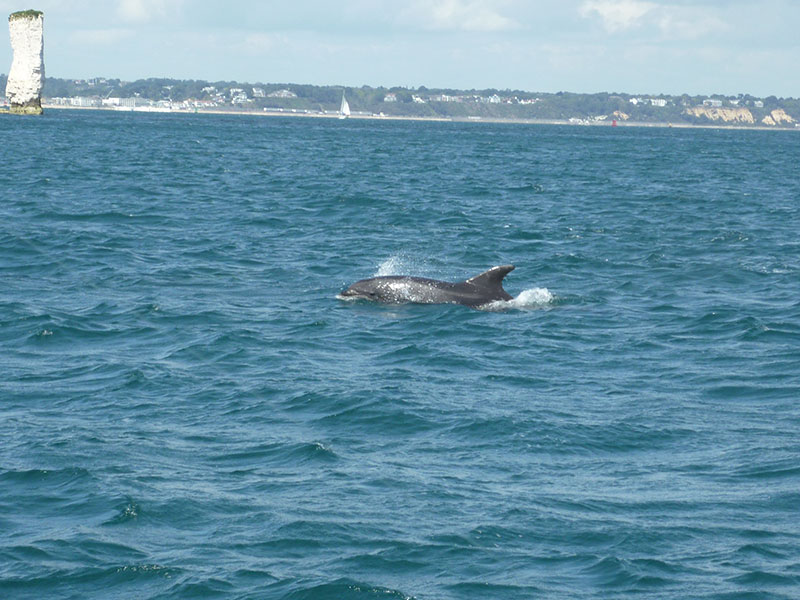 dolphins seen on Mistress Linda sea fishing trips
